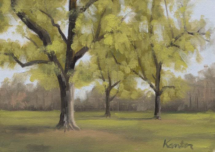 Spring Trees in Prospect Park